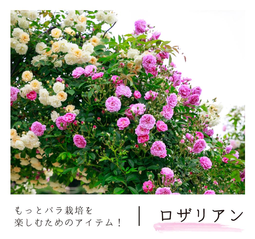 もっとバラ栽培を楽しむためのアイテム