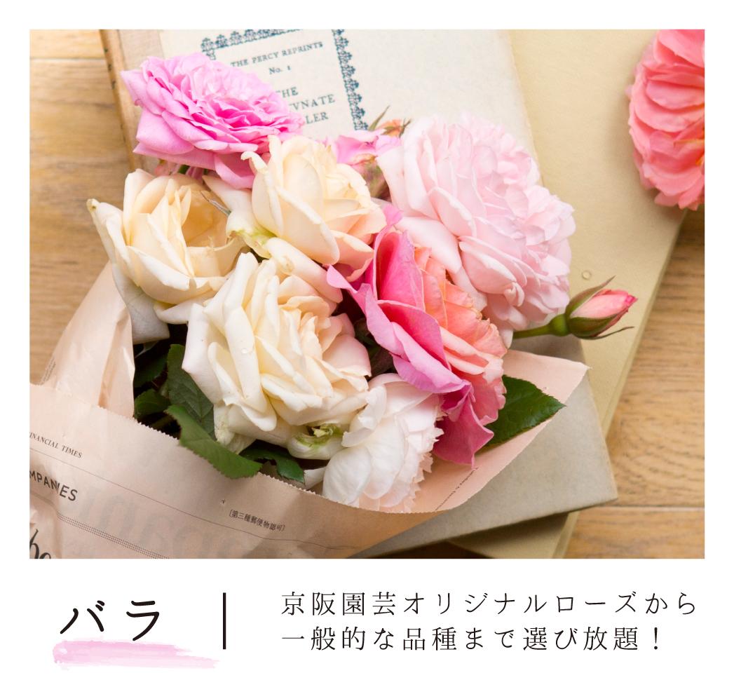 京阪園芸オリジナルローズから一般的な品種まで選び放題!