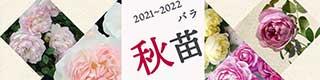 2021秋苗バナー320