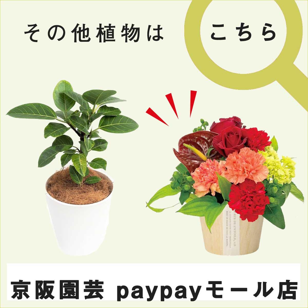 京阪園芸PayPayモール店はこちらから